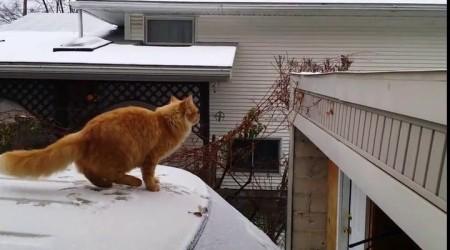 Questo gatto ama il rischio!