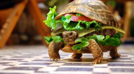 condividi un Super Tartaburger!