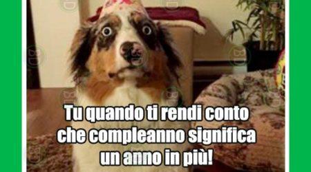 Immagini Divertenti Buon Compleanno Con Cane E Faccia Da Stupido