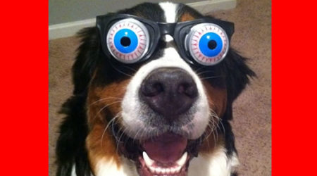 Immagini Divertenti Di Buon Compleanno Con Cane Simpatico Immagini