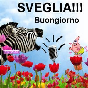 Immagine divertente zebra immagini divertenti for Immagini divertenti del buongiorno gratis