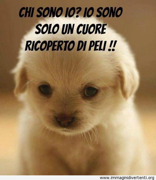 Immagine divertente cagnolino cucciolo tenero immagini for Immagini divertenti con frasi gratis
