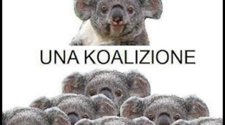 immagini divertenti e Immagini Divertenti Koala