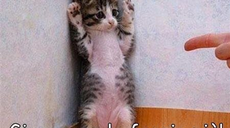 immagini divertenti e Immagini Divertenti Animali Con Frasi