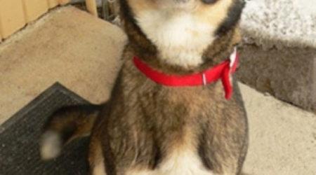 immagini divertenti e Immagini Divertenti Cani