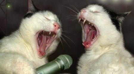 immagini divertenti e Immagini Divertenti Karaoke