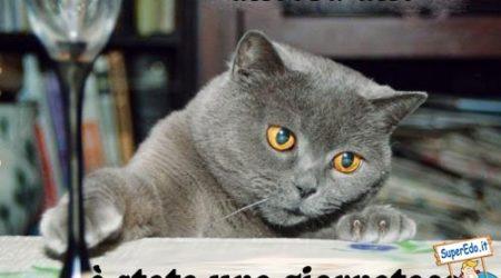 immagini divertenti e Immagini Divertenti Gatti