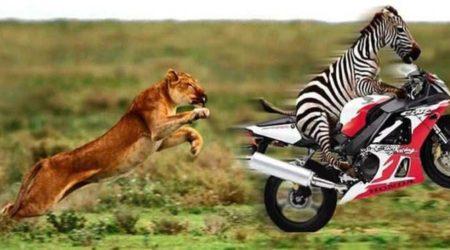 immagini divertenti e Download Immagini Divertenti