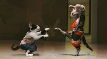 immagini divertenti e Immagini Divertenti Karate