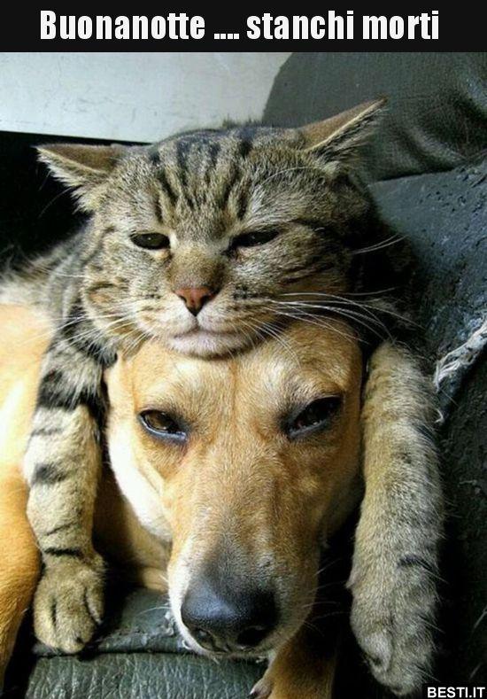 immagine divertente animali